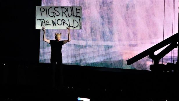 pigs_rule_the_world_Sisto_scandozza